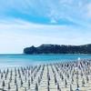 Отдых в Италии: в этом году цены на аренду пляжных зонтов и шезлонгов практическ