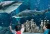 В Каттолике в аквариуме с акулами установят подводный рождественский вертеп