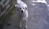 Итальянец, который сбил собаку и не оказал ей помощь, был оштрафован на 389 евро