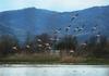 В Италии пройдет праздник природных заповедных зон
