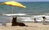 Триест: пляж для собак