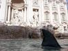 В фонтане Треви была замечена акула