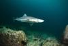 В Рим прибыла передвижная выставка акул