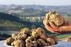 С 7 по 13 октября в Альбе пройдет фестиваль белого трюфеля