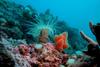 12 морских заповедников в Италии будут охраняться Европейским Союзом