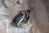Историческое событие в аквариуме Генуи