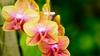 Монте Порцио Катоне приглашает в царство орхидей
