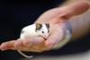 В Венето в пакете с молоком была обнаружена мышь
