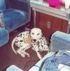 Владельцам собак крупных пород запрещено пользоваться железнодорожным транспортом