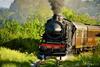 Treno Natura: все по вагонам на открытие жемчужин итальянской природы!