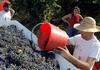 В 2013 Италия вышла на первое место в мире по производству вина