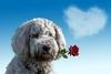 Лучший подарок ко Дню святого Валентина? Итальянки предпочитают цветы, сообщает