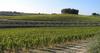 Виноградник Бароло стоит дороже, чем остров в Карибском море: 2,5 миллиона евро