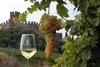 На холмах Вероны проходит традиционный фестиваль, воспевающий вино Соаве