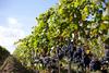 Выходные на виноградниках в Ассизи