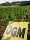 Европейский союз дает «зеленый свет» генно-модифицированным продуктам , Италия,
