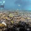 Свалка на итальянском морском дне: 77% - пластик