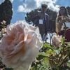 Римский розарий открылся на период осеннего цветения