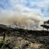 Пожар на Везувии распространяют пироманы, используя живых животных