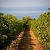 Гарда - единственная винодельческая зона, вошедшая в рейтинг от Wine Enthusiast