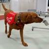 Обученные собаки способны определять заражение коронавирусом не хуже, чем молеку