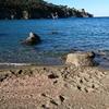 Тысячи креветок выбросились на пляж острова Искья