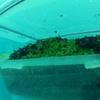 Базилик, выращиваемый итальянцами на морском дне, назван самым полезным