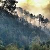 В Империи потерявшийся турист стал виновником обширного лесного пожара