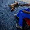 Бездомный иммигрант, собравший 768 штрафов от полиции, принудительно удален из В