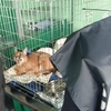 Полиция Милана конфисковала у гражданки Болгарии хищную кошку, которую та выгули