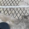 В археологическом парке Помпеи полиция арестовала туристку, сдирающую с пола дом