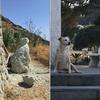 На острове Искья установят статую собаки, которая жила на могиле хозяина