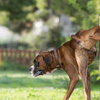 В провинции Вероны оштрафован владелец собаки, справившей малую нужду на мусорну