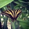 Волшебный мир бабочек нашел приют в Риме