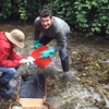 Неподалеку от Миланa в реке Севезо обнаружено золото