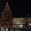 """""""'Spelacchio' is back"""": в Риме зажгла огни главная рождественская ель"""