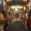 Cantine Aperte 2017: итальянские винодельни ждут гостей!