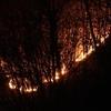 В Комо двое студентов, жаривших мясо на углях, уничтожили 110 гектаров леса