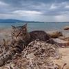Су Паллосу: итальянский пляж, где кошки живут на свободе (и где каждую из них на