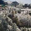 Рекордные заморозки, самые сильные за последние двадцать лет: Пьемонт оповестил