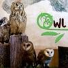 В Италии открылся первый совиный бар, owl-cafe