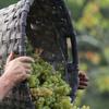 Да здравствует Вендеммия: лучшие фестивали винограда Италии