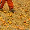 В Иврее дан старт апельсиновым сражениям