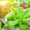 Готовим салат: секреты итальянских шеф-поваров