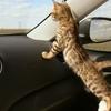 В провинции Ареццо кошка закрылась в автомобиле своих хозяев
