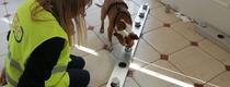 Собаки-антиковид прибыли в Италию
