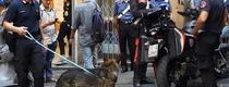 В Генуе полиция выписала 3000 евро штрафа за справление малой нужды на улице