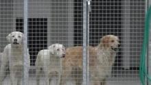 В Италии хозяйка процветающих отелей завещала миллионы евро бродячим собакам