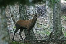 """Туризм: национальный парк """"Foreste Casentinesi"""" принимает туристов из России и Украины"""