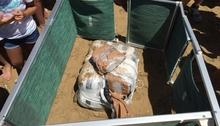 На один из пляжей Абруццо море выбросило 50 килограмм марихуаны